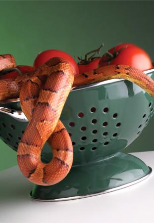 snake_710
